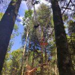 Planche des Belles Filles_PDBF_Activités_Loisirs_Accro'Planche-Parcours dans les arbres_Sortie_Famille_Franche-Comté-©WokaLoisirs (3)