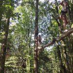 Planche des Belles Filles_PDBF_Activités_Loisirs_Accro'Planche-Parcours dans les arbres_Sortie_Famille_Franche-Comté-©WokaLoisirs (4)